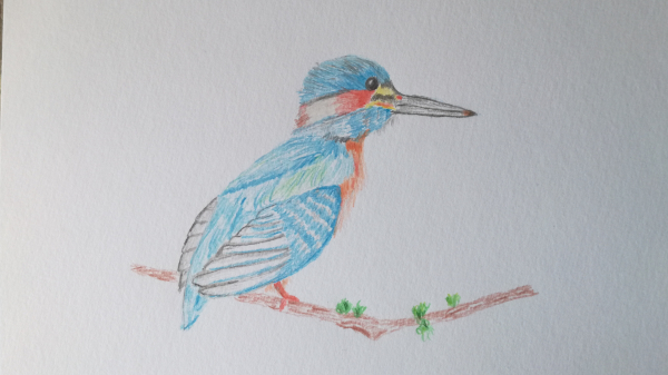 Kingfisher Pencil Sketch